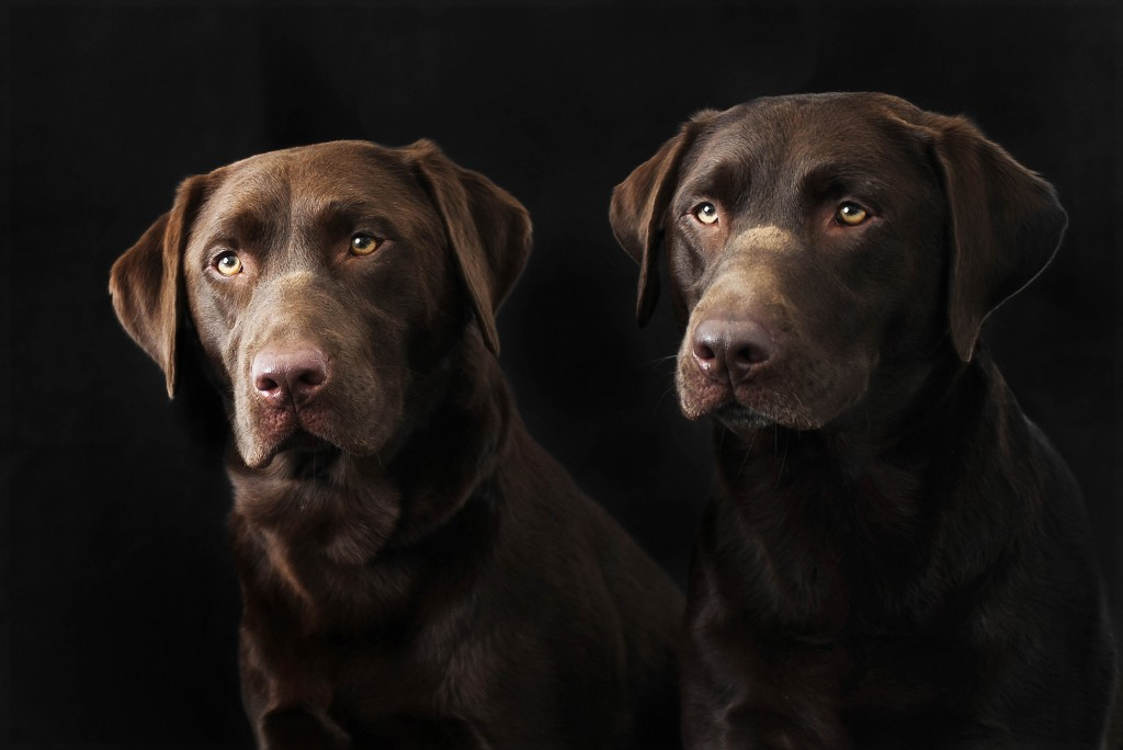 Specialist Pet Photography - Dogs
