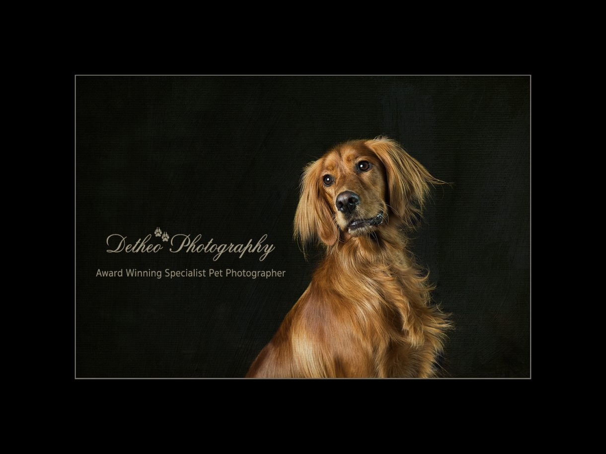Award Winning Pet Photographer, Highly Commended Award Winning Image .