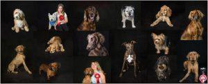 Farnham Dog Show Collage