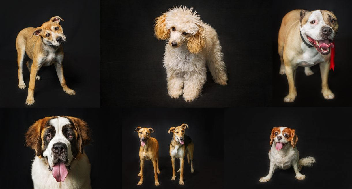 Photographs of dogs taken by Detheo Photography form the RSPCA Dog Show 2016