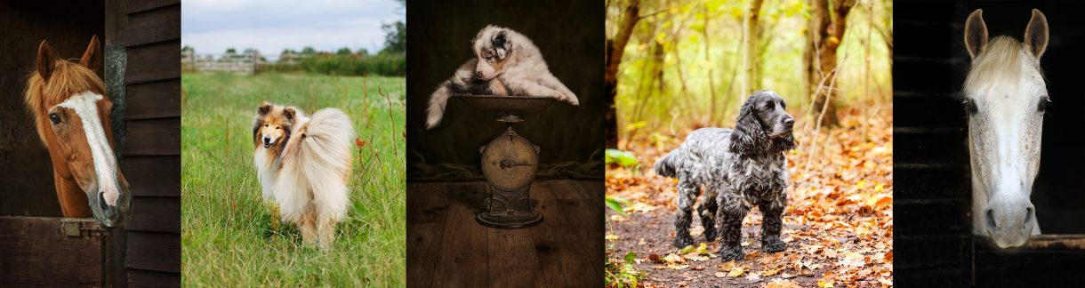 Specialist Pet Photography by Detheo Photography