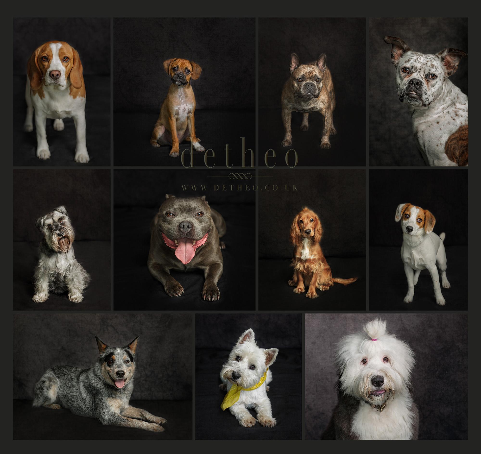 Sawbridgeworth Dog Show collage